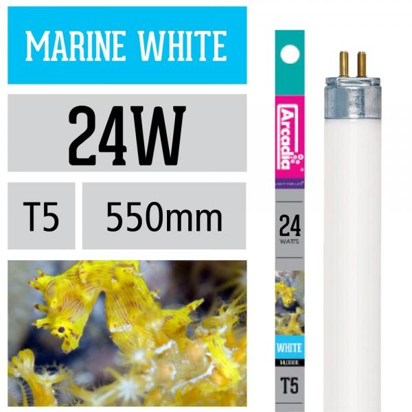 Marine White Leuchtstoffröhre 14.000 Kelvin T5
