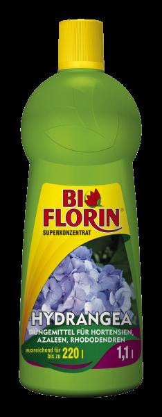 Bi Florin HYDRANGEA