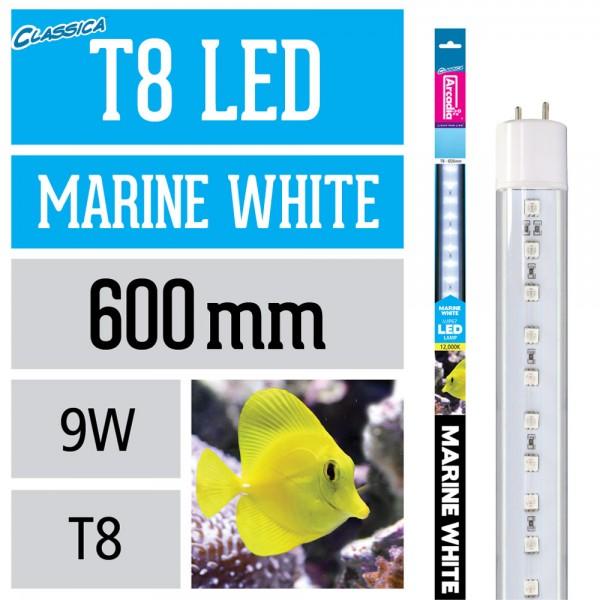 T8 LED Lampe - Marine White