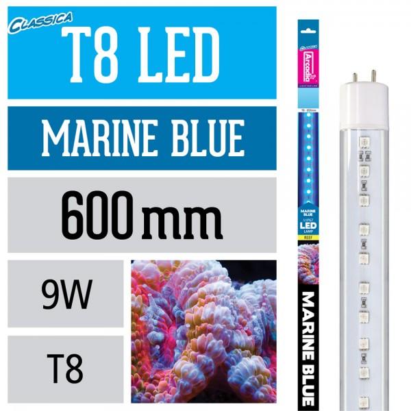 T8 LED Lampe - Marine Blue