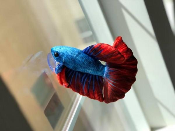GreenPleco - Betta Fish Plüschtier