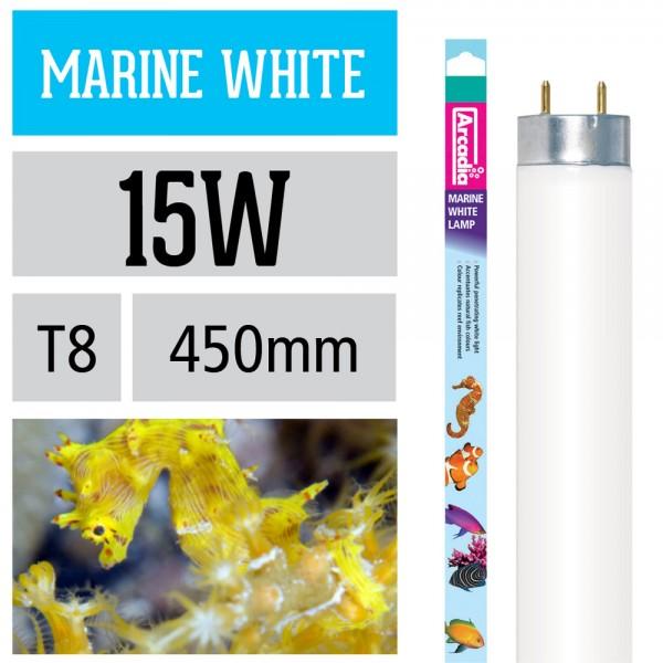 Marine White Leuchtstoffröhre 14.000 Kelvin T8