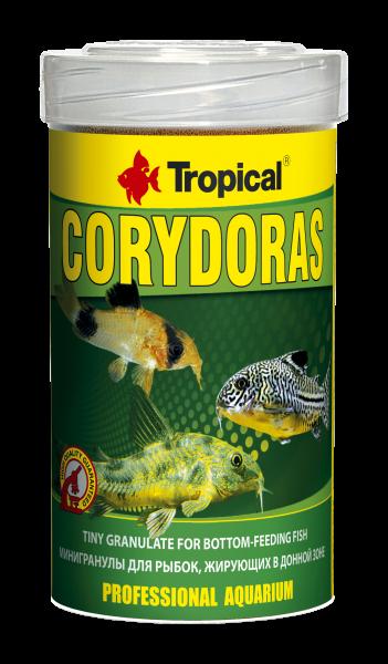 Corydoras
