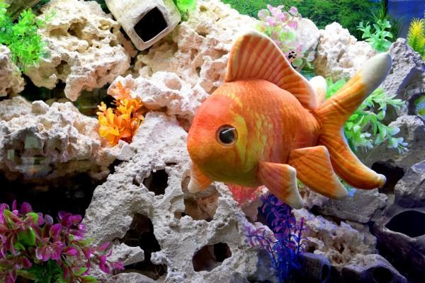 GreenPleco - Goldfish Plüschtier