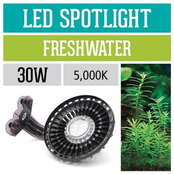 30 Watt LED Spotlight - 5,000K